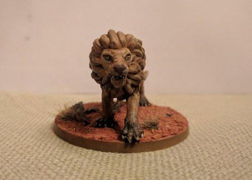 lion-eyes.jpg
